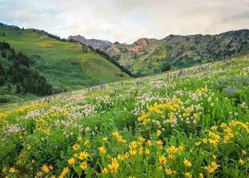 Wasatch Crest // Wondering where to bike in Utah? In this post, I've rounded up the best Utah bike trails for bikepackers, mountain bikers, & cyclists.