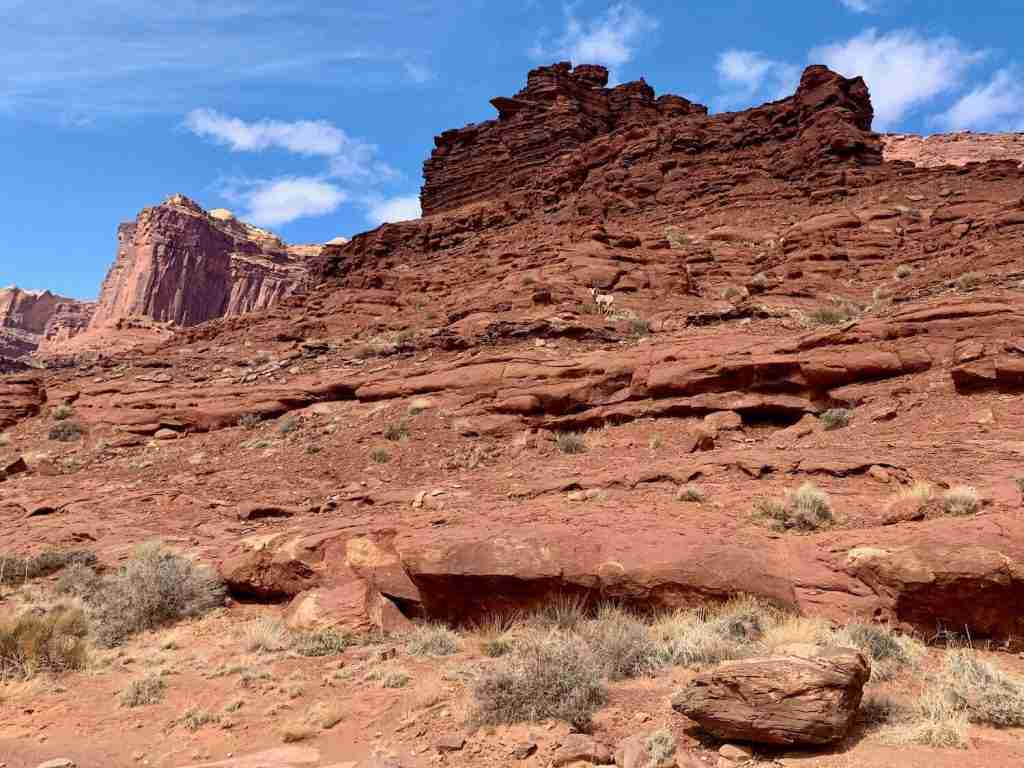 Learn the best tips for planning your White Rim Trail bikepacking adventure including what to pack, how to carry water, and where to camp.